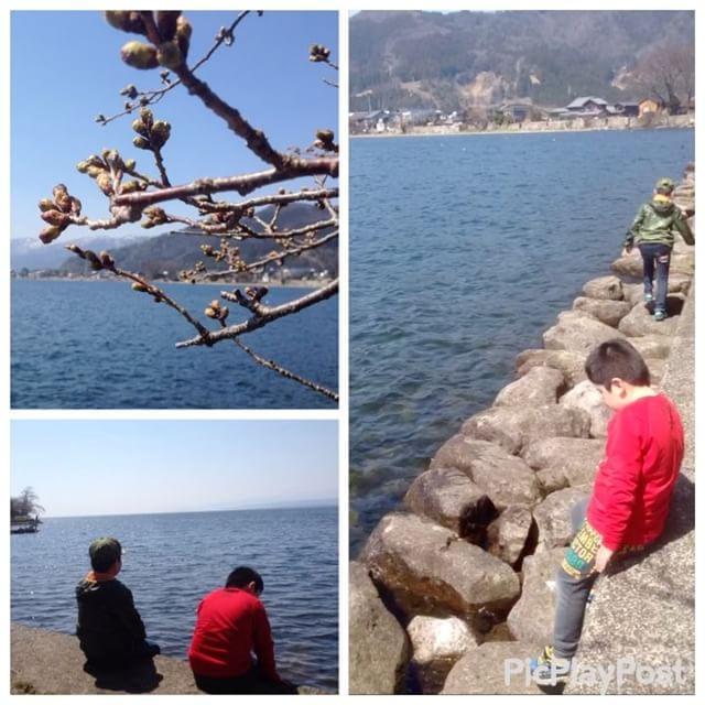 海津大崎の桜、蕾はふっくらとしていましたが、残念ながらまだ咲いていませんでした。もう少しで咲きそうだったなぁ……惜しい!(-_-;)けれど、お天気も良くて本当に気持ち良かったぁー️#太陽めがね #海津大崎の桜まだかぁー⁈#滋賀県LOVE️