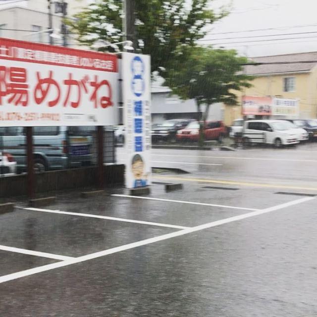 朝から激しい豪雨です。雨が止む気配がありません(-_-;)ずぶ濡れタヌキをひとまず店内に一時避難しました。#太陽めがね#ずぶ濡れタヌキ避難中#グリーンカーテンはすくすく成長中