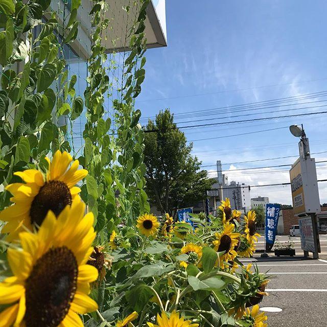 ようやく北陸も梅雨明けしましたね️夏らしいスッキリとした澄んだ青空と、ギラギラの眩しい太陽の日差し️これぞ夏️って感じです️暑いけど、ジメジメとおさらばできてホント嬉しいです(≧∀≦)#太陽めがね#ようやく梅雨明けかーい️#今年の梅雨長かった(-_-;)#暑いけど、夏はイイねー️